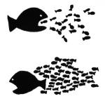 organize-fish